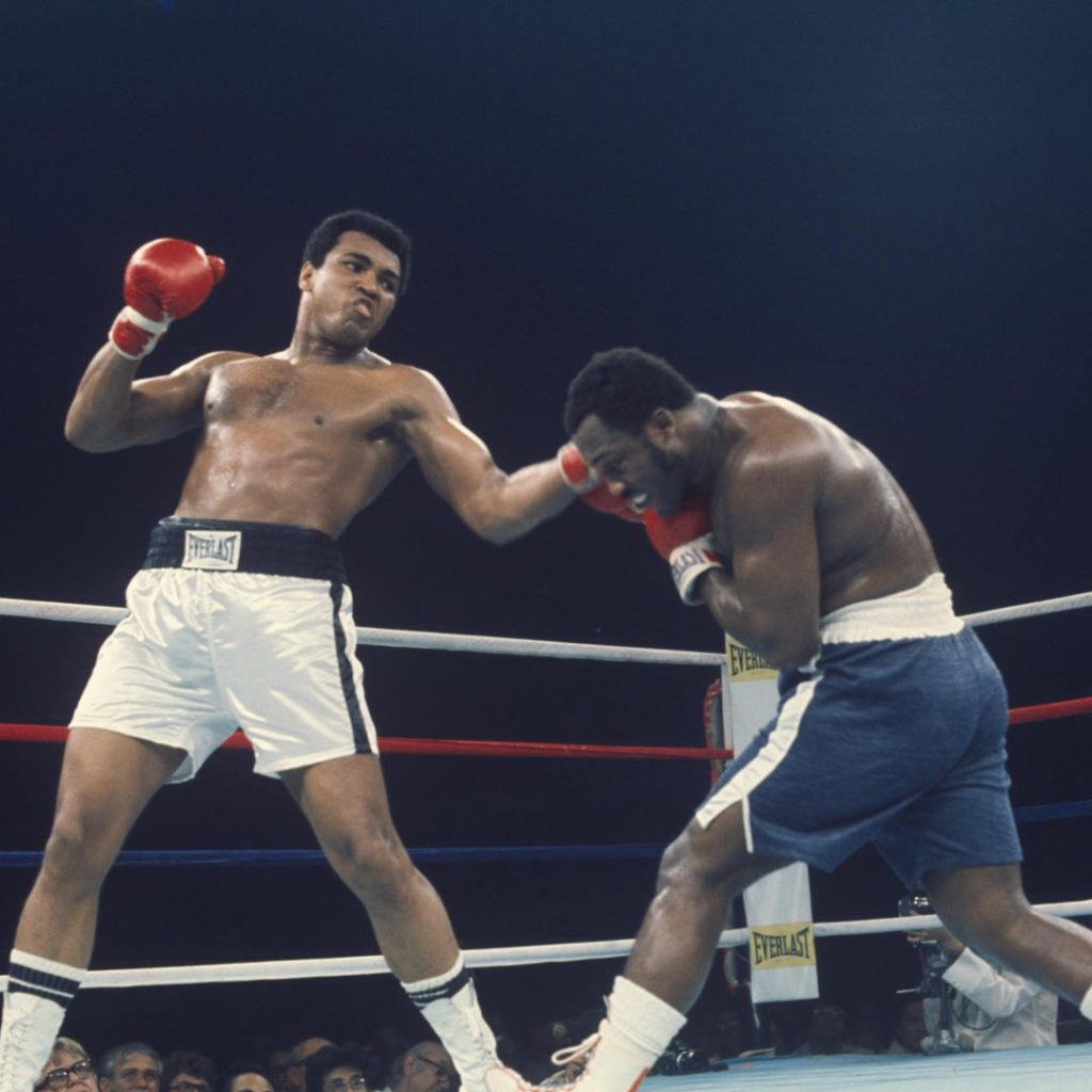 Самые известные боксеры